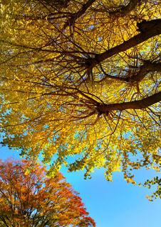 近くの木のアップの写真・画像素材[879989]