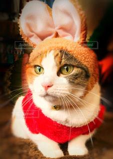 赤白と青の目を着て猫の写真・画像素材[934459]