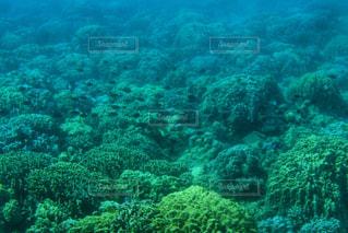 サンゴの水中図の写真・画像素材[2794275]