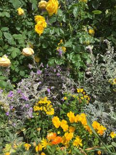 花の写真・画像素材[465250]
