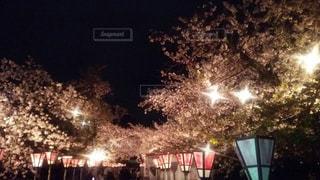 桜 - No.465263