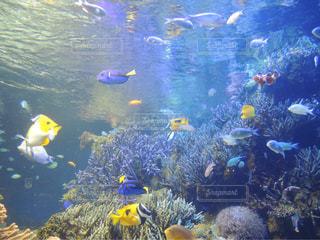 熱帯魚の写真・画像素材[564619]