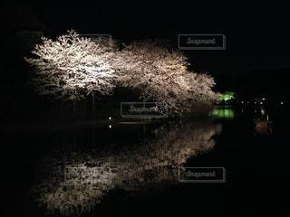 桜 - No.465475