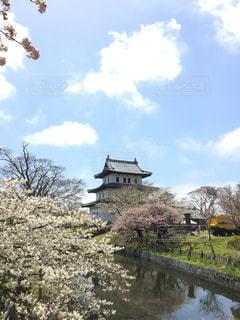 桜の写真・画像素材[465358]
