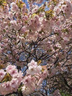 春の写真・画像素材[465360]