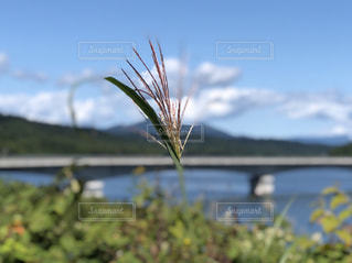 秋のダム湖の写真・画像素材[2454811]