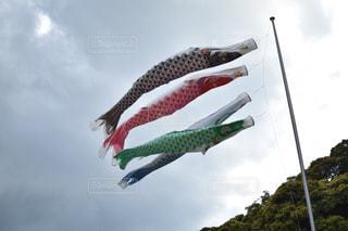 鯉のぼり - No.465486