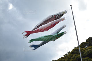 鯉のぼりの写真・画像素材[465488]