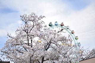 春の写真・画像素材[465499]