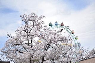 春 - No.465499