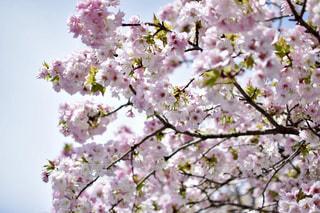 花の写真・画像素材[465528]