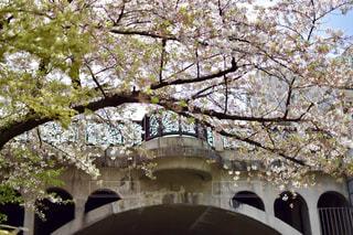 春の写真・画像素材[465530]