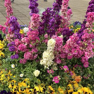 花の写真・画像素材[465531]