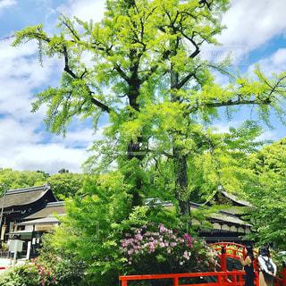 #公園#日本#自然#お花の写真・画像素材[466005]