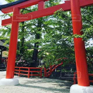 #公園#日本#自然#お花の写真・画像素材[466007]