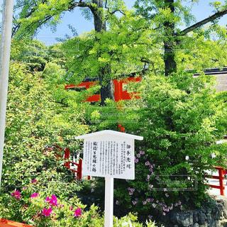 #京都の写真・画像素材[469242]