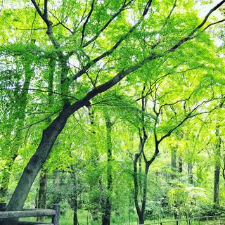 #緑#自然#癒しの写真・画像素材[490626]