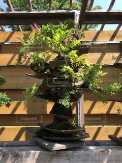 植物の写真・画像素材[581295]