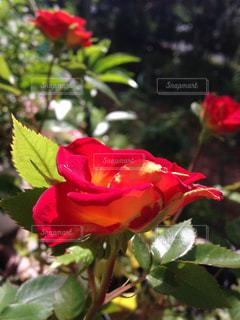 花の写真・画像素材[481840]