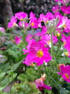 花の写真・画像素材[481871]