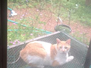 亀の飼育容器の上に乗っている猫の写真・画像素材[745565]