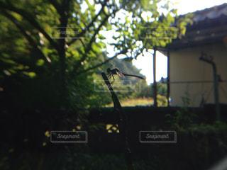 トンボの写真・画像素材[764421]