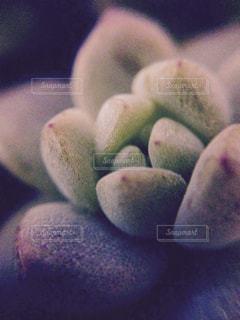近くの多肉植物の写真・画像素材[935566]