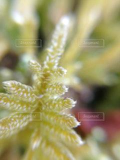 苔のアップの写真・画像素材[936246]
