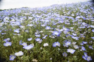 花の写真・画像素材[465948]