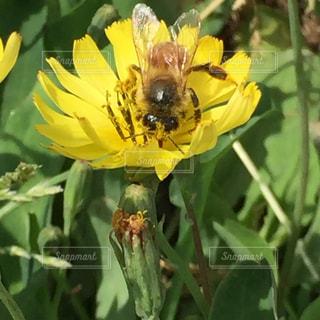 蜂の写真・画像素材[466411]