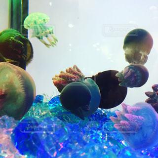 クラゲの写真・画像素材[466664]