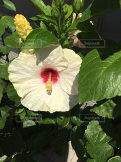 花の写真・画像素材[836174]