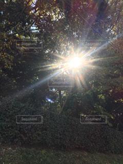 空に花火の写真・画像素材[1816030]