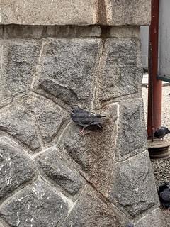 石造りの建物の上に座っている猫の写真・画像素材[2284219]