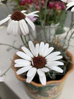 紫色の花で満たされた花瓶の写真・画像素材[3154670]