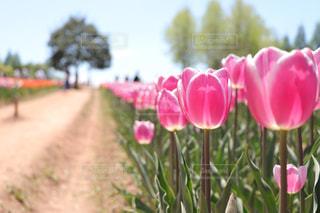 花の写真・画像素材[467197]