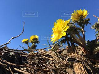 flowerの写真・画像素材[467238]
