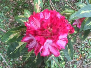 flowerの写真・画像素材[467240]