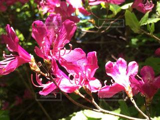 flowerの写真・画像素材[495494]