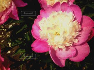 flowerの写真・画像素材[500840]