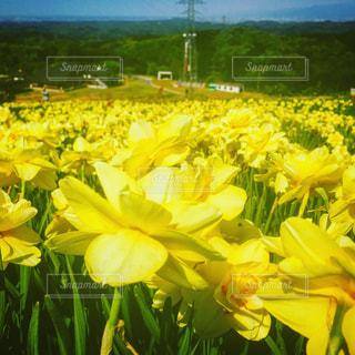 花の写真・画像素材[536893]