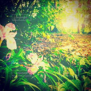 風景の写真・画像素材[543943]