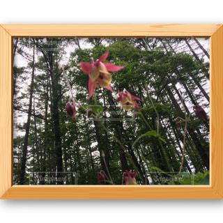 flowerの写真・画像素材[575253]