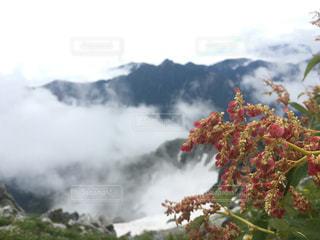 植物の写真・画像素材[689716]