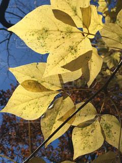 近くの木からぶら下がって傘の写真・画像素材[903403]