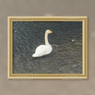 テーブルの上に座っている鳥の写真・画像素材[980312]