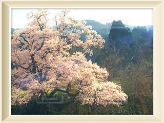 日当たりの良い窓の上に座って花の花瓶の写真・画像素材[1118665]