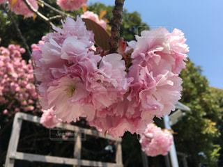 花の写真・画像素材[467412]