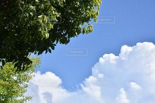 空の写真・画像素材[615243]