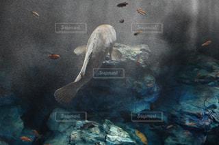 水の中を泳ぐ鳥 - No.713315